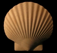 Image Onlay - Scallop Shell