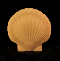 Image CLEARANCE - 4PC - Scallop Shell Onlay - 10